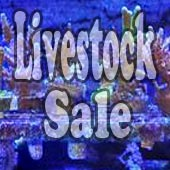 Reef Aquarium Livestock Sales &amp; Trades