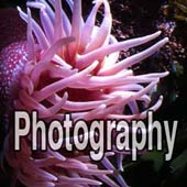 Reef Aquarium Photography