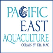 Reef Aquarium Pacific East Aquaculture