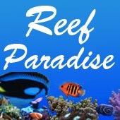 Reef Aquarium Reef Paradise