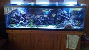 picturephp?albumid352&amppictureid2990&ampthumb1 - my 125 gallon reef