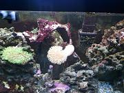 picturephp?albumid348&amppictureid2940&ampthumb1 - starting my reef