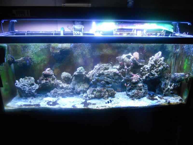 picturephp?albumid337&amppictureid2815 - starting my reef