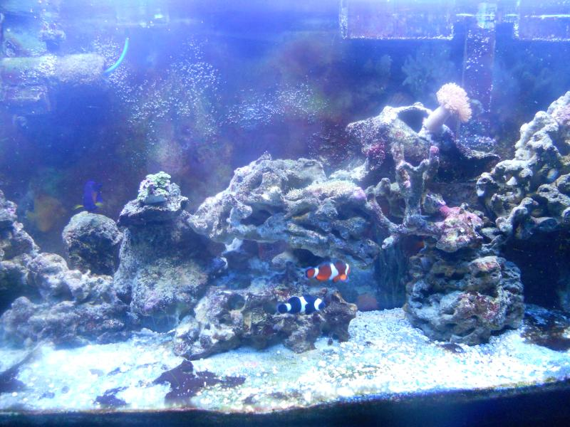 picturephp?albumid337&amppictureid2820 - starting my reef