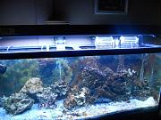 picturephp?albumid325&amppictureid2673&ampthumb1 - 75 gallon keeping it simple