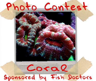 april potm contest - April Photo of the Month Contest - sponsored by Fish Doctors