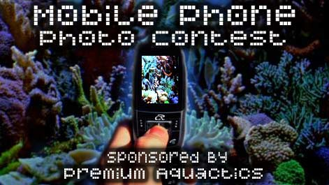mobile photo contest - Mobile Photo Contest - sponsored by Premium Aquatics