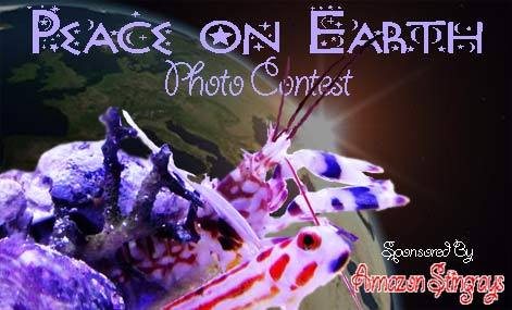 peace on earth photo contest - Photo Contest: Peace on Earth  - sponsored by Amazon Stingrays