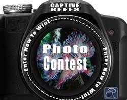 photo contest - Reef Photo Contest!