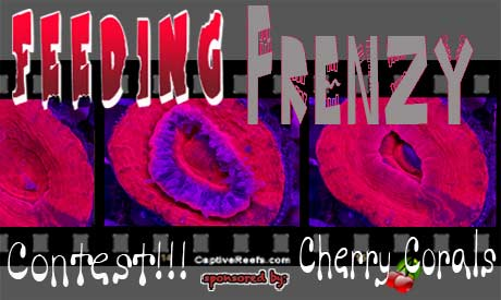 potm feedingfrenzy lg - Hey you!!! Check out the Feeding Frenzy Contest - sponsored by Cherry Corals!