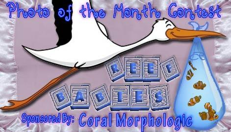 potm reef babies - VOTE NOW - Reef Babies - sponsored by Coral Morphologic