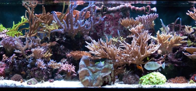 werdlone tank2 - Werdlone's Starphire SPS Reef