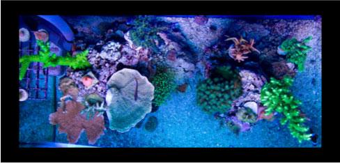 Divecj5 S Sps Nano Reef