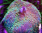 -fruity-pebbles-mushroom-jpg